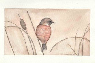Stonechat in ink & watercolour by Zeena Thompson