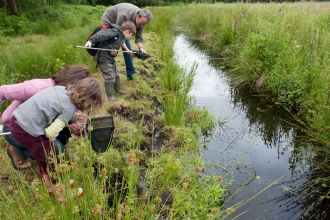 Family pond dipping